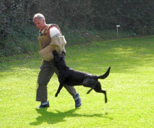 Schutzhundtraining, Hund beim Anbiß